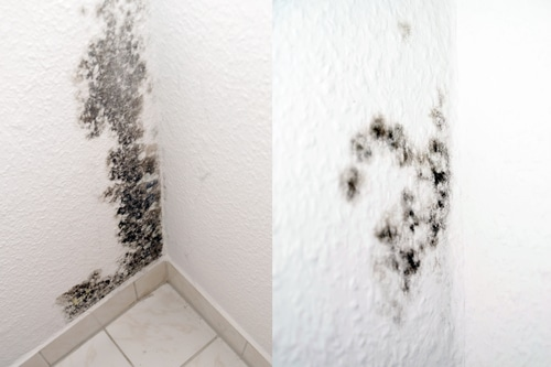 Mold On A White Wall Downtown Toronto House Cleaning